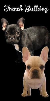 French Beach Towel - French Bulldog Puppies Dog Beach Bath Towel 30