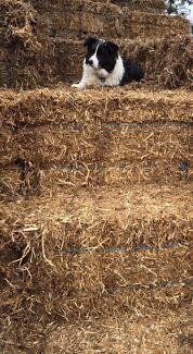Pea Straw & Barley Straw For Sale Wasleys Gawler Area Preview