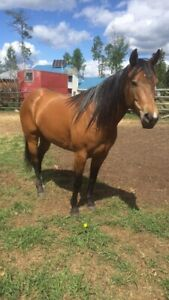 Coming 4 year old filly