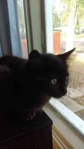 Free Black Kittens Regina Regina Area image 1