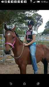 Well bred Stock horse gelding *REDUCED to sell Woodford Moreton Area Preview