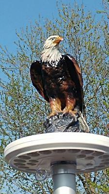 Flagpole Eagle on Display Topper Finial Ball Hand Painted USA Realistic Lifelike