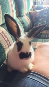 Baby Bunny looking for forever home ❤️