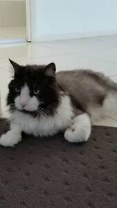 Jet - Looking for a loving home Redland Bay Redland Area Preview