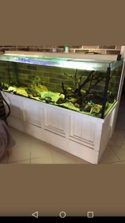 6 ft fish tank