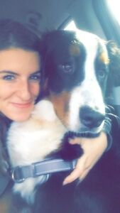 Navan and orleans dog walking, sitting and visits
