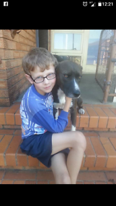 Wonderful dog looking for a home Strathpine Pine Rivers Area Preview