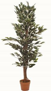 4 ft 120 cm Variegated Ficus Tree Real Wood Stems Lifelike Replica Artificial