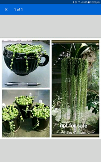 WANTED TO BUY STRING OF PEARLS,HEARTS,BEANS DONKEYS  TAIL