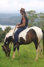 Beautiful Pinto Arabian Mare Montville Maroochydore Area Preview