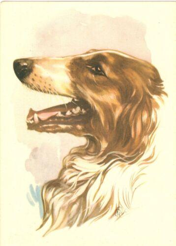Rare Oversize Borzoi Dog Postcard De Muinck Co  Amsterdam Netherlands c1940s