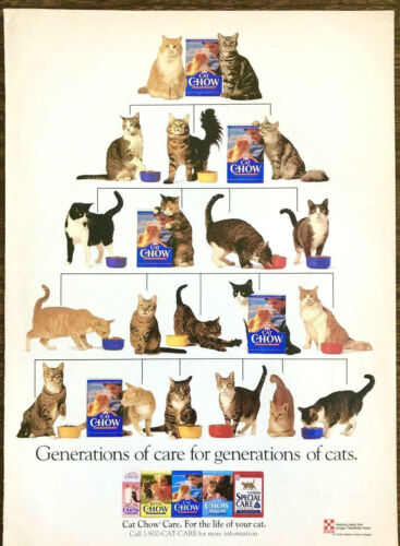 1993 Purina Cat Chow PRINT AD Generations of Care for Generations of Cats