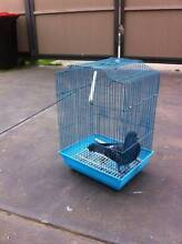 two pigeon for sale Melton West Melton Area Preview