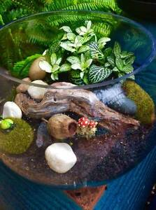 TERRARIUM, EASY CARE WELL ESTABLISHED PLANTS Rochedale South Brisbane South East Preview