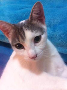 Loving Rescue Cat for Adoption Logan Village Logan Area Preview