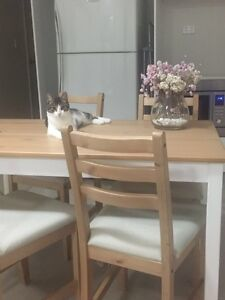 5months female kitten need new home Burwood Burwood Area Preview