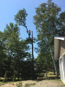 Tree Service.*Insured*