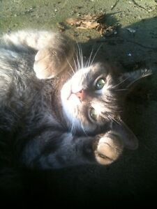 CAT SITTER in Beaconsfield (pet first aid certified)