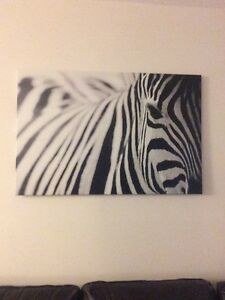 Zebra canvass art