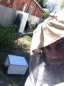 Bee hives for sale East Victoria Park Victoria Park Area Preview
