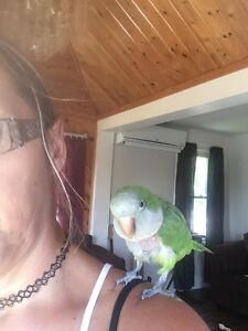 Wanted parrots you can no longer care fir