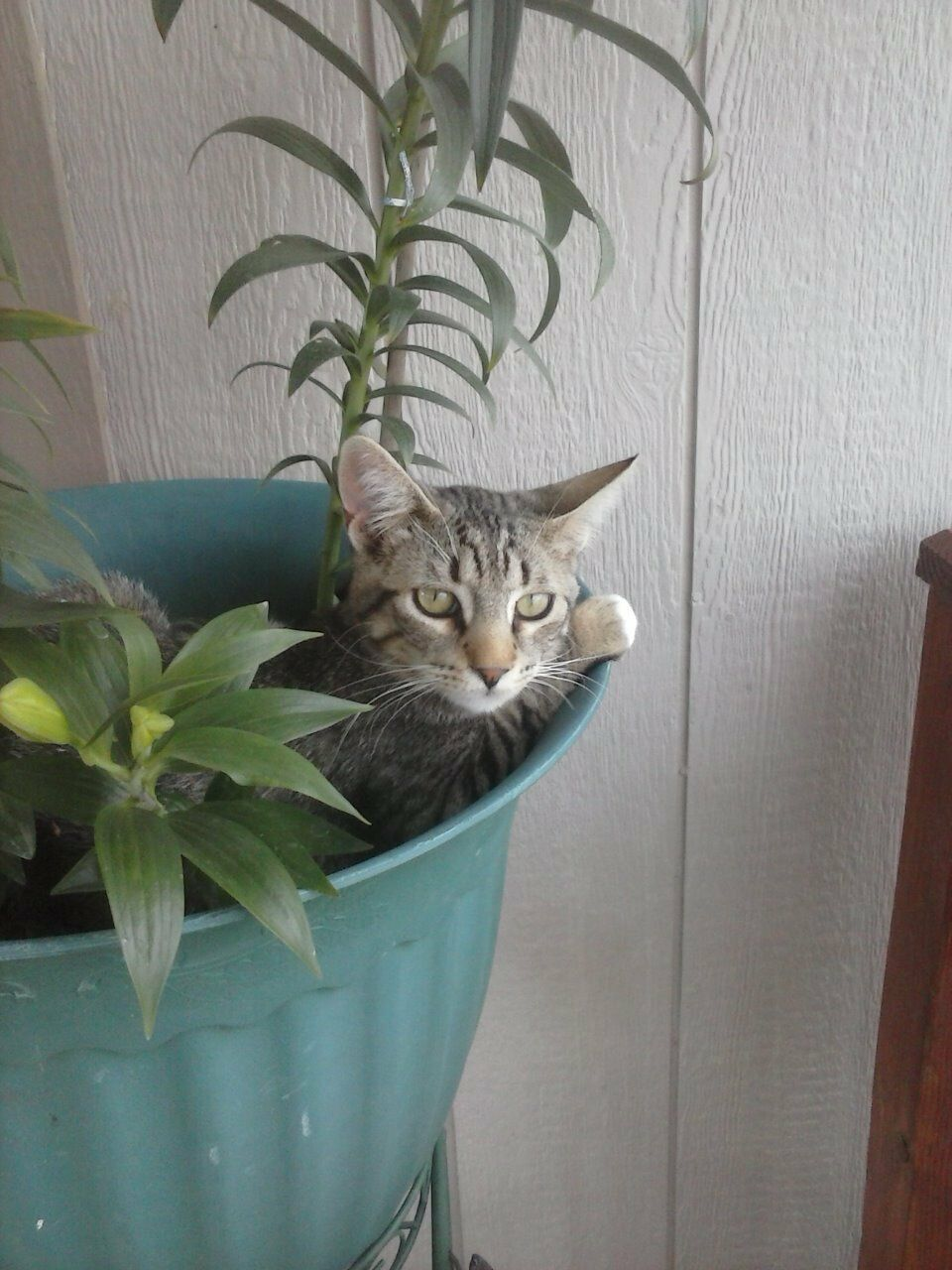 cattimer1