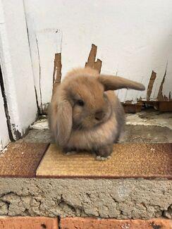 Darcy the bunny.