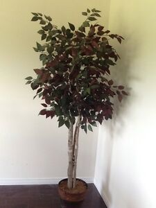 Artificial 6ft Ficus Tree