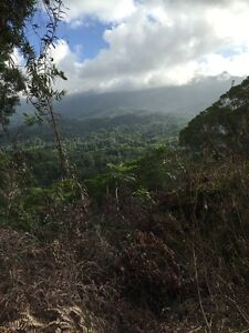 Gorgeous Rainforest Land with some unique opportunities !! Miallo Cairns Surrounds Preview