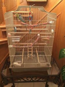 Budgies together with cage