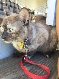 ASAP! Beautiful cat to good home! Ipswich Ipswich City Preview