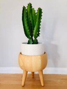 Hardwood Mid Century Plant Stand. Pot and Cactus not included.