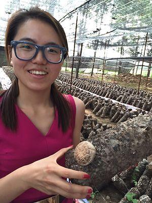 Dried Shiitake Mushrooms Organic Grown Chinese Premium Natural Whole Cap 17.6oz