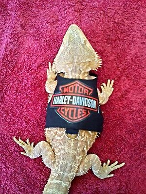Lil' Bestie Bearded Dragon reptile Harness and Leash HARLEY DAVIDSON