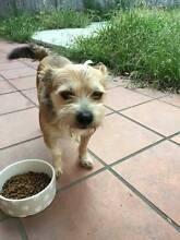 dog relocation Ashfield Ashfield Area Preview
