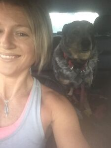 Reliable and respectful house sitter Central Coast Avoca Beach Gosford Area Preview
