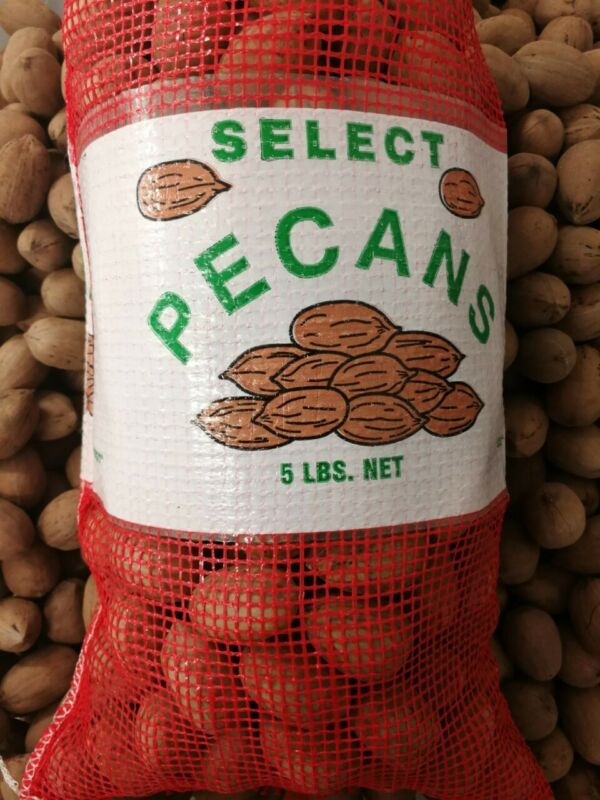 2020 Crop 5 Pounds In Shell Pecans from Texas