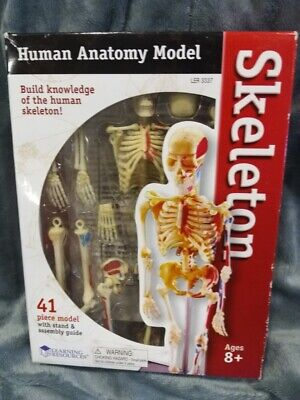Learning Resources - Human Anatomy Model Skeleton 41 Pieces Brand New
