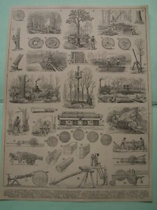 planche ancienne 1900 bois foret scierie sciage outils anciens ebay. Black Bedroom Furniture Sets. Home Design Ideas