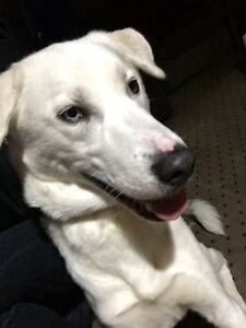 Dog found in Lorneville