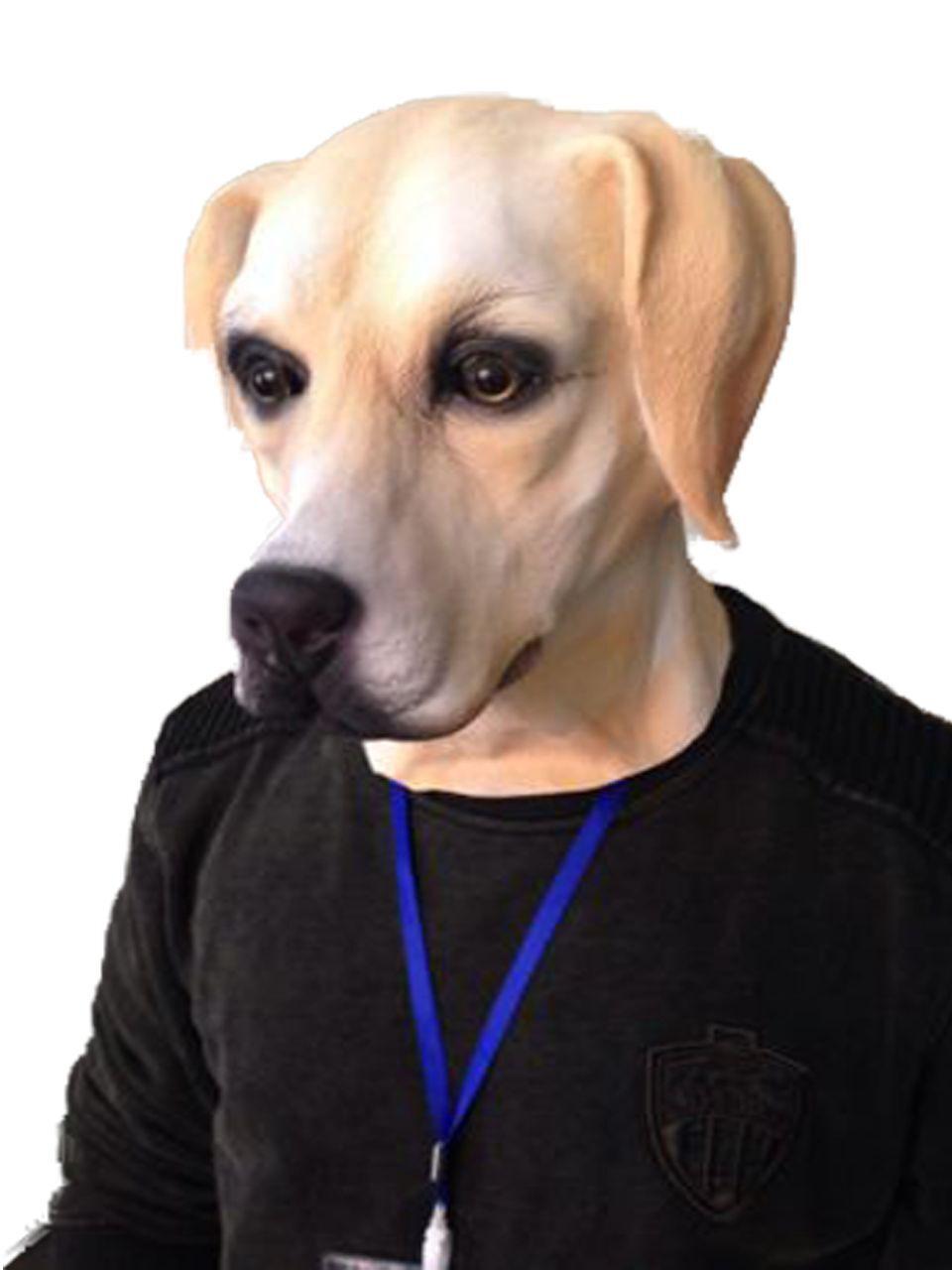 Doggie Mask: Lily Allen Golden Labrador Dog Mask High Quality Fancy