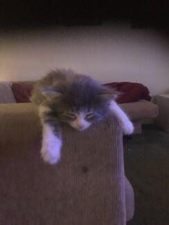 Kittens 🐱