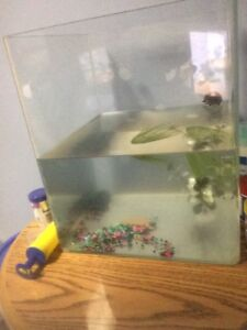15 gallon fish tank comes with heater and filter
