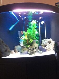 55 gallon corner bow flu all
