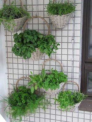 Auch dies ist eine Form des vertikalen Kräutergartens.