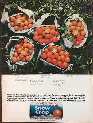 ORIGINAL 1965 Snow Crop Frozen Orange Juice Concentrate Ad The Five Best (Best Frozen Orange Juice)