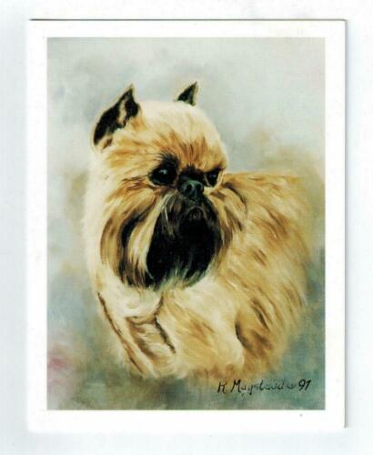 New Brussels Griffon Head Study Notecards - 12 Note Cards By Ruth Maystead