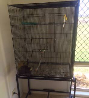 Male Canary incl. Cage Great Whistler Jimboomba Logan Area Preview