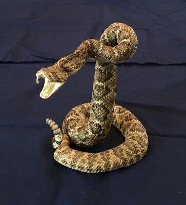 """Real  Diamondback Rattlesnake Mounted Western Snake Striker: 29-33"""""""