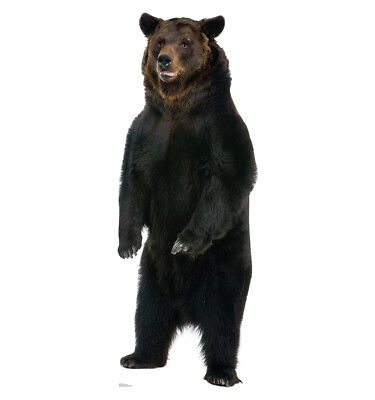 BROWN BEAR LIFE SIZE STAND UP FIGURE ANIMALS HUNTING HUNTER HOME DECOR NATURE!!! - Bear Standing Up